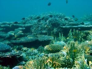 Coral landscape 3m patch steneck