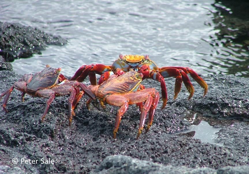 Stories from a Coral Reef  Beginnings in Bermuda | Peter Sale Books