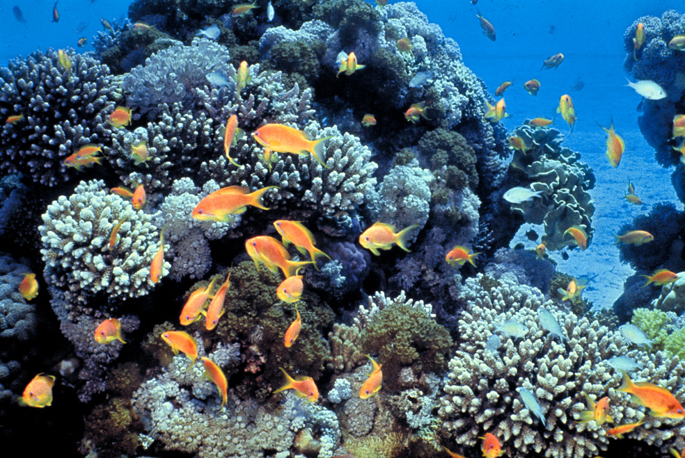 Gulf_of_Eilat_(Red_Sea)_coral_reefs