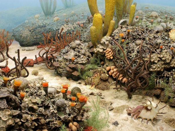 Permian seafloor U Mich Gallery_Image_11118