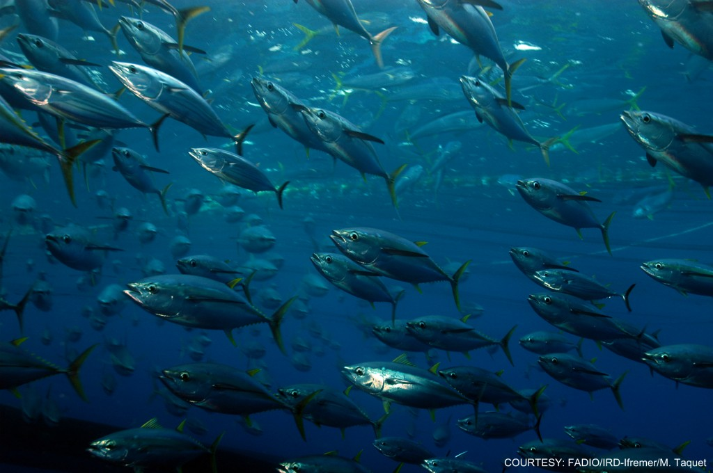 Skipjack Tuna ISS Foundation
