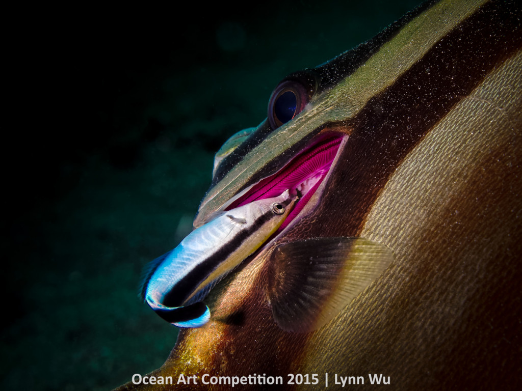 cleaner & batfish hm-mb-ocean-art-2015-lynn-wu-1200_0