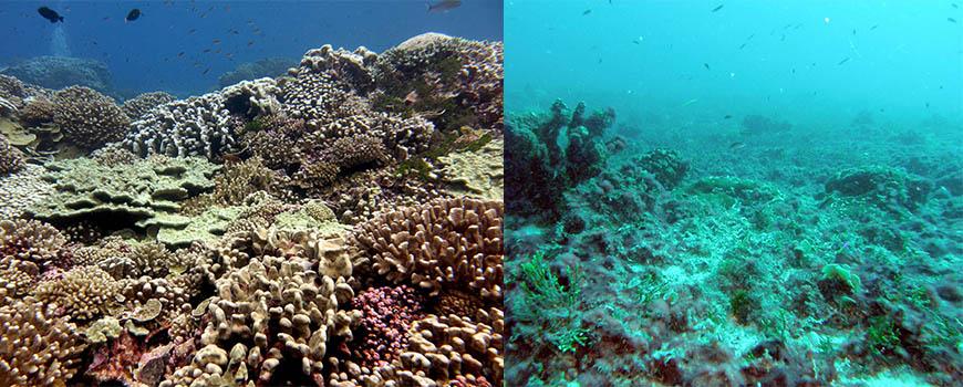 coral & algae doiminated reef Line Islands Smith-header_0