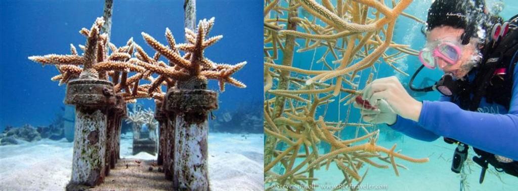 coral nurseries