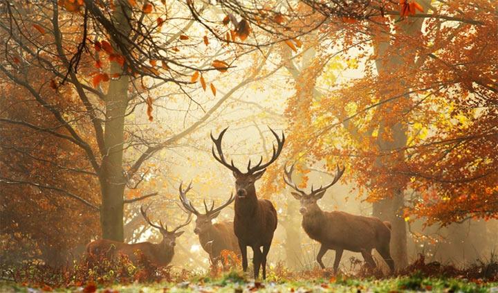 deer in forest Alex Saberi