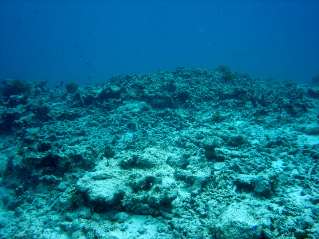 degraded-reef-2005-gbr