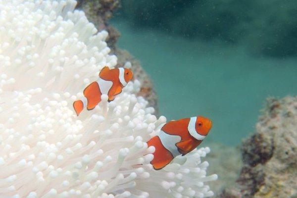 nemo & bleached coral Justin Marshall CenkJlgWIAAEWZa