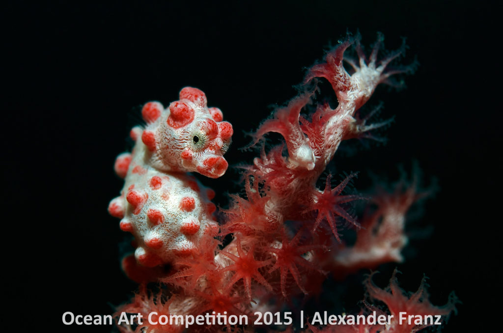 pygmy seahorse 6th-m-ocean-art-2015-alexander-franz-1200
